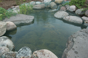 Fall care for the backyard pond garden talk for Garden pond cleaning nets